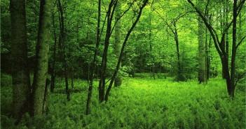 bosque gestionado