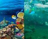 El Día Mundial de los Océanos en el colegio